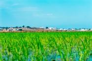 Rice Views to Carvalhal