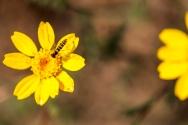 buzzing around in comporta portugal