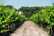 Vineyards HdC