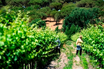Vineyard Comporta