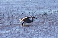 Ramsar Recognised Wetlands
