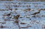 Birding Photography in Comporta