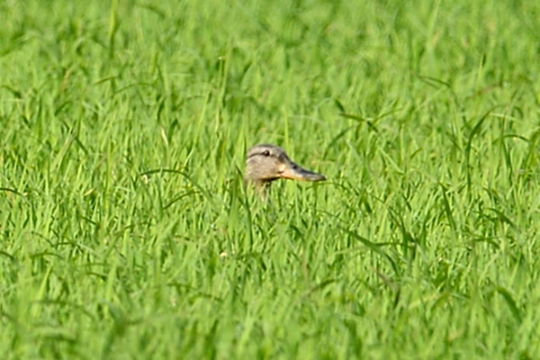 Birding in Comporta