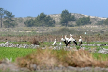 Bird Watching in Comporta