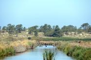 Natural Irrigation