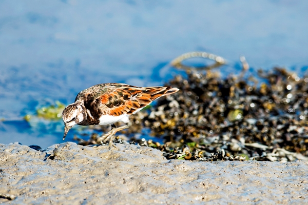 Beach Birds in Comporta